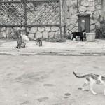 Кошки на улицах Афин