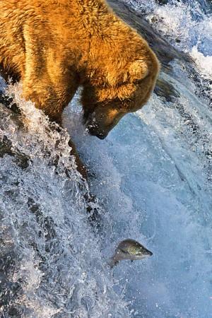 Национальный парк Катмай, автор фото - Azov.